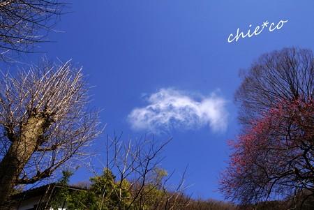 円覚寺の空・・3