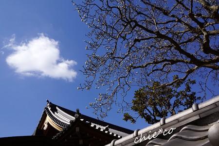 円覚寺の空・・4