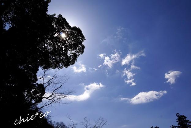 円覚寺の空・・5