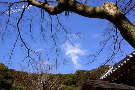 円覚寺の空・・6