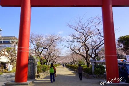 桜彩の鎌倉 004