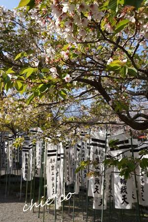 桜彩の鎌倉 021