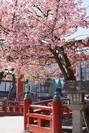 桜彩の鎌倉 053