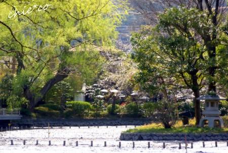 桜彩の鎌倉 050