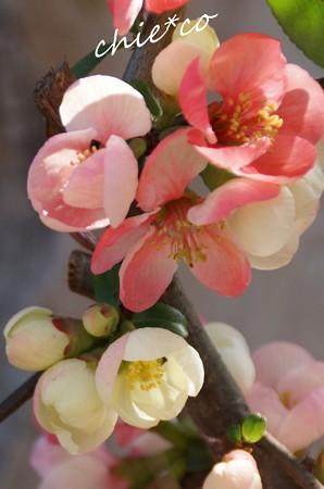 桜彩の鎌倉 058