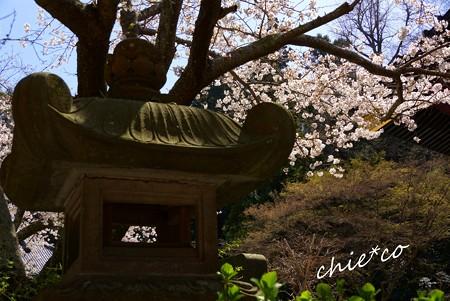 桜彩の妙本寺..10