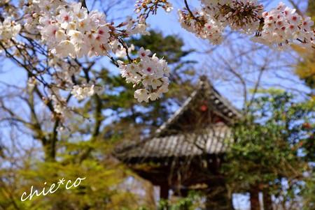 桜彩の妙本寺..11