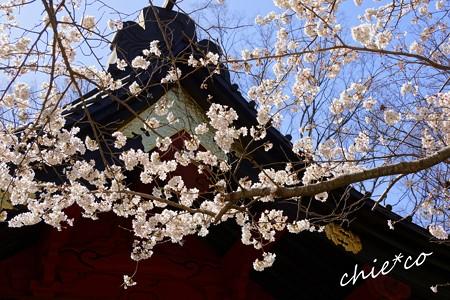 桜彩の妙本寺..12