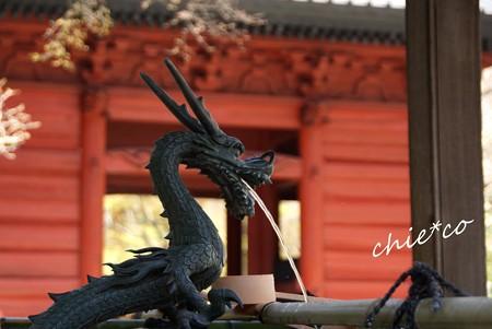 桜彩の妙本寺..14