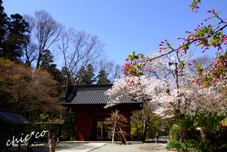 桜彩の妙本寺..18