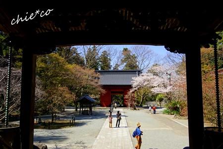 桜彩の妙本寺..19