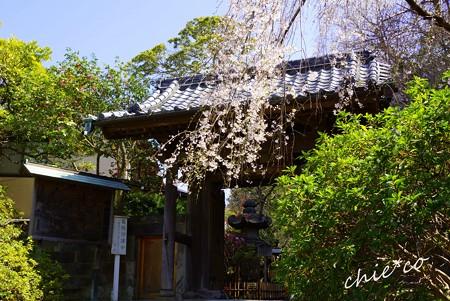 桜彩の安国論寺..2