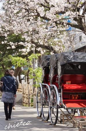 桜と・・人力車・・