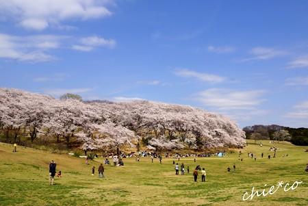 桜 Yokohama 014