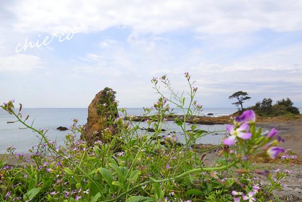 ハマダイコン咲く海辺・・2