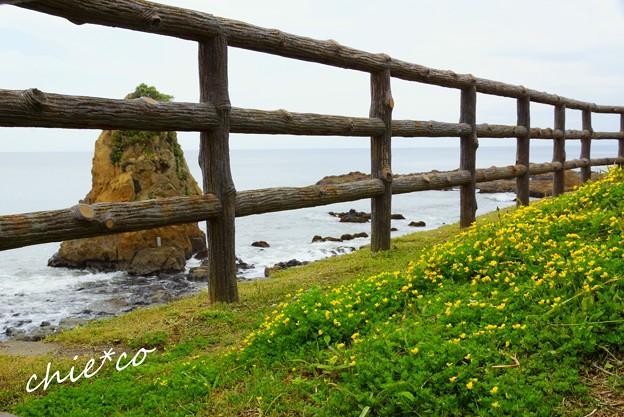 黄色の花咲く海辺・・