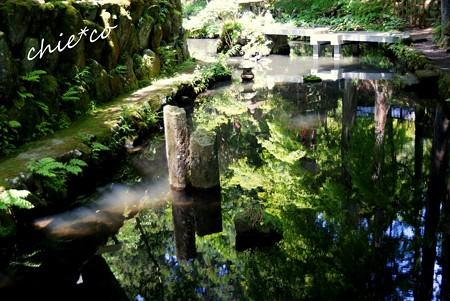 緑を映す池・・
