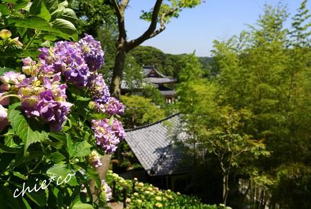 鎌倉 長谷寺 159