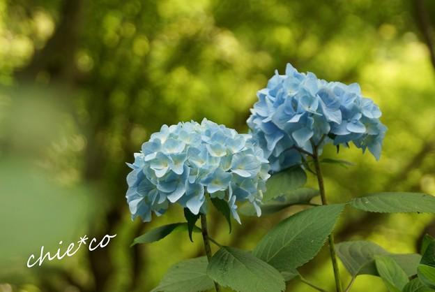 北鎌倉~水無月 054