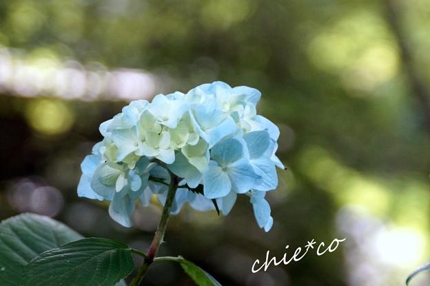 北鎌倉~水無月 063
