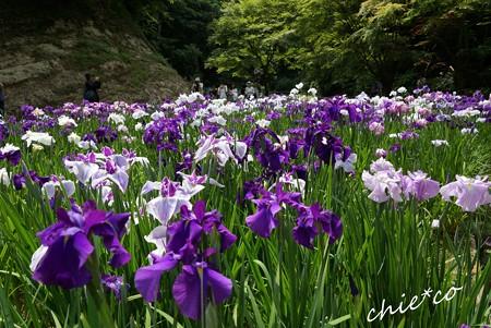 北鎌倉~水無月 171