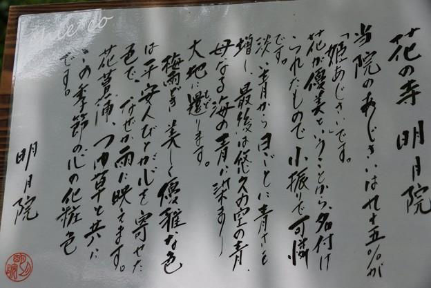 北鎌倉~水無月 271