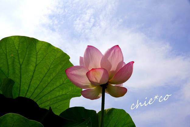 flower center 043