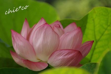 flower center 042