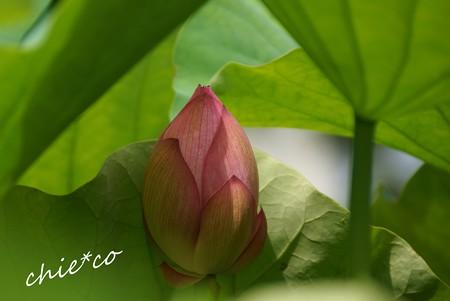 flower center 045