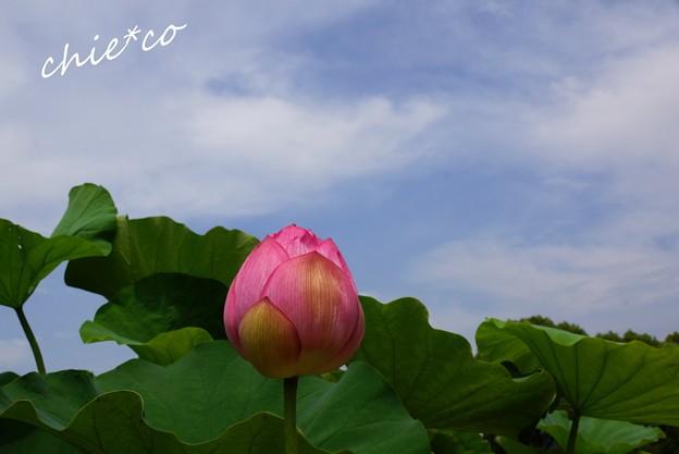 flower center 056