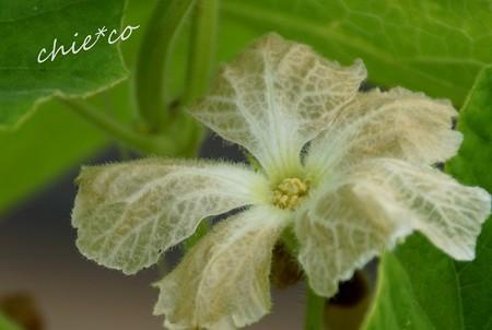 flower center 150