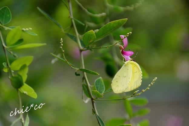 萩と・・蝶と・・