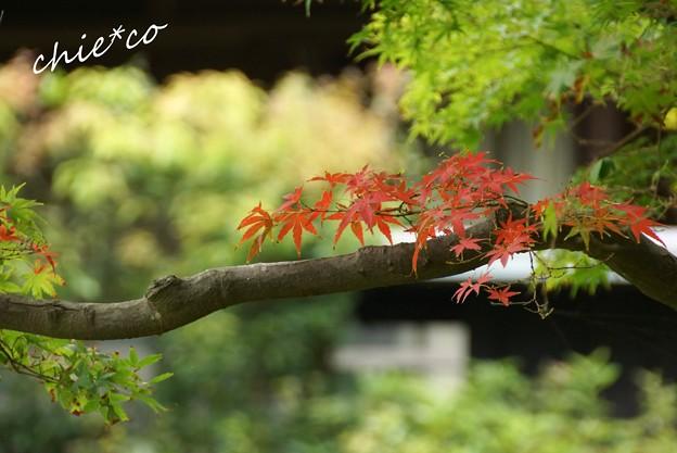 北鎌倉 158