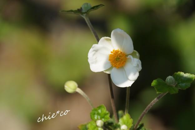 鎌倉長谷 050