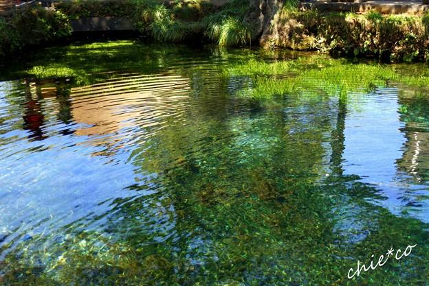 山中湖 河口湖 069
