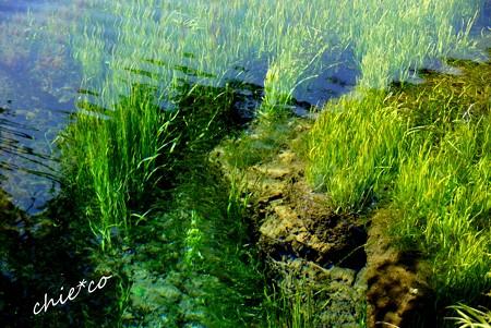 山中湖 河口湖 076