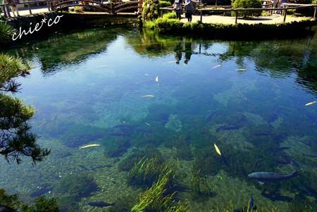 山中湖 河口湖 090