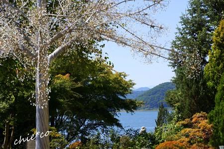 山中湖 河口湖 223