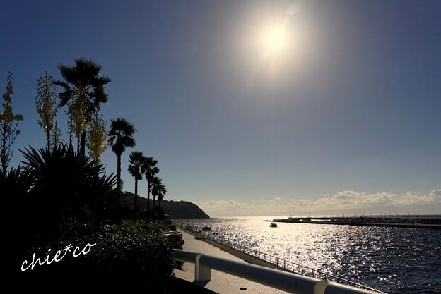 江の島-219