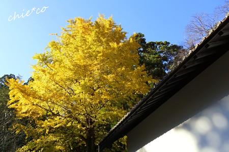 東慶寺~暮秋~-067