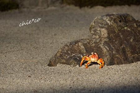 枯山水を彩る蟹・・