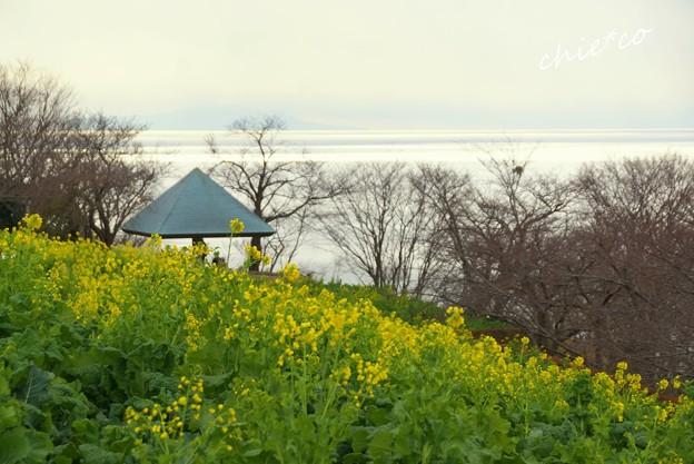 吾妻山公園-175