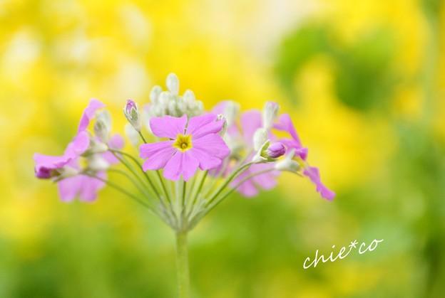 botanical garden-209