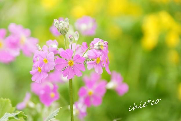 botanical garden-212