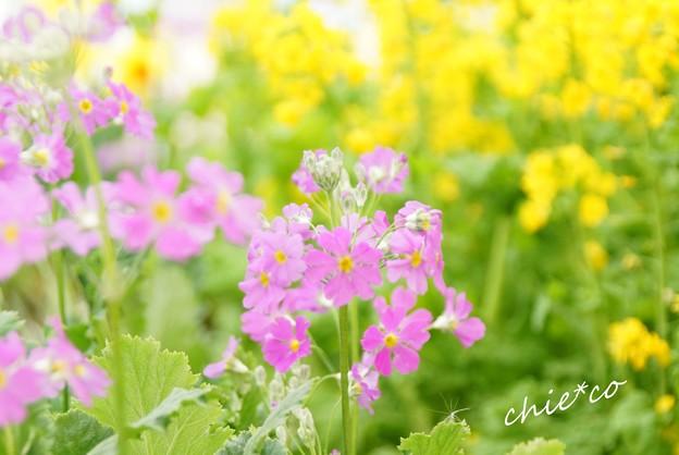 botanical garden-214