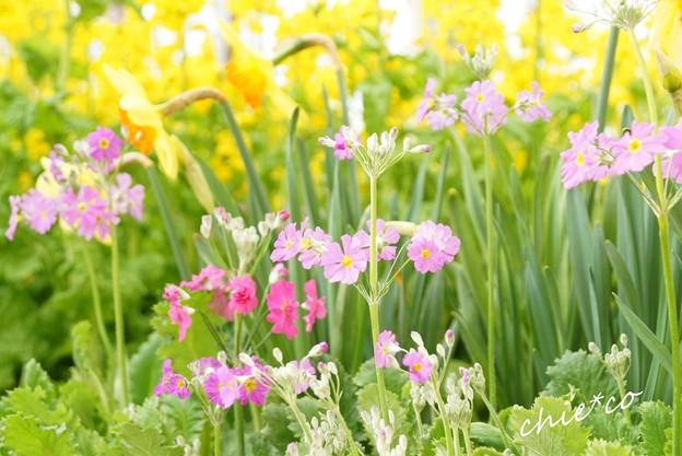 botanical garden-221