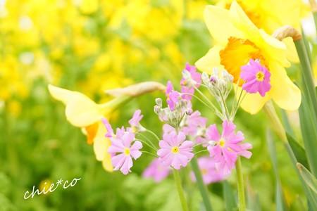 botanical garden-217