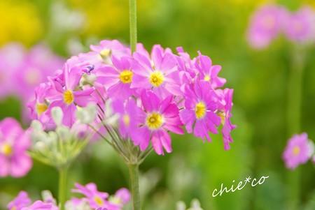 botanical garden-226