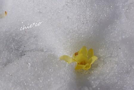 雪彩の北鎌倉-233