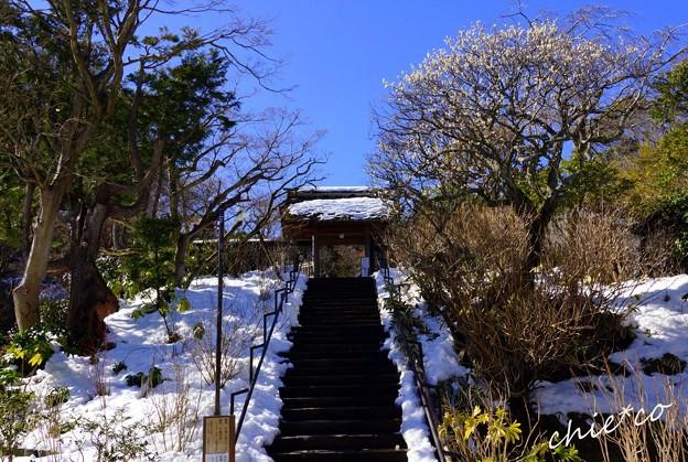 雪彩の北鎌倉-049